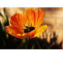 Orange Bloom Photographic Print