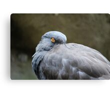 Bird with Orange Eye Canvas Print