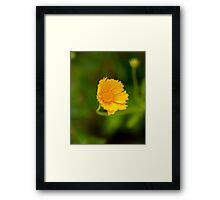 Wild Yellow Flower Framed Print