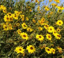 Wildflowers in the Sun Sticker
