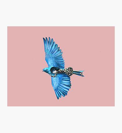 The Blue Bird Photographic Print