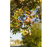Auntumn leaves Photographic Print
