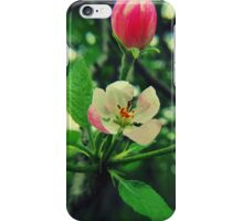 Flowers - wild apple blossoms (2011) iPhone Case/Skin