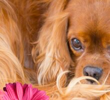 Happy Easter Cavalier King Charles Daisies Sticker
