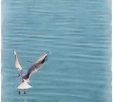 Seagull over the water by CharliSL