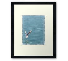 Seagull over the water Framed Print