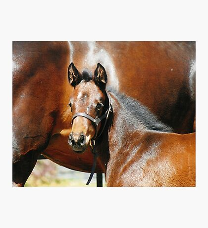 Thoroughbred Filly Photographic Print