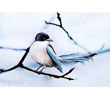 blue /Agat/ Photographic Print