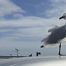Seagull by Roz McQuillan