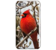 Cardinal in Pussy Willow iPhone Case/Skin