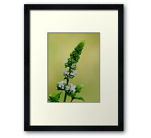 Mint Flowers Framed Print