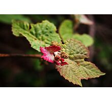 Baby Grape Leaves Photographic Print