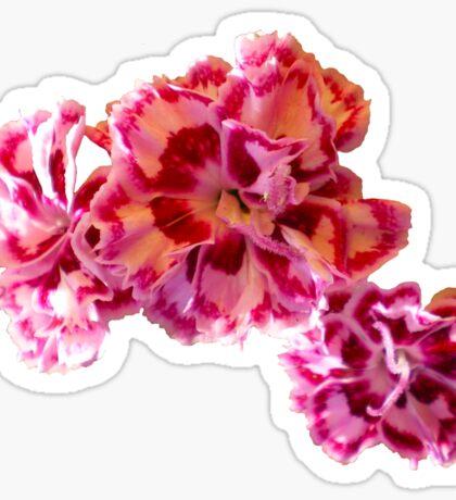 Frilly Flowers Sticker