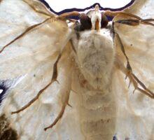 Moth on Glass Sticker Sticker