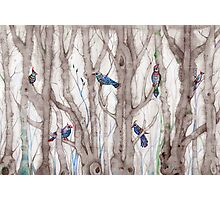 blue trees Photographic Print