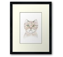 Colour Pencil Cat Drawing Framed Print