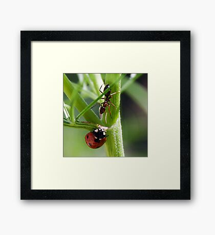 Howdy Neighbor Framed Print