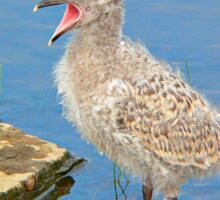 Chick Looking for Mum (Baby Seagull) Sticker