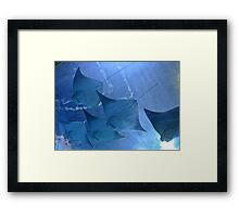 Little Rays Framed Print