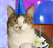 Birthday Tabby Cat by jkartlife