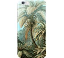 Botanical, vintage, ferns, palm trees, rainforest iPhone Case/Skin