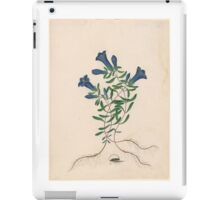 James Bolton, active , Liverpool Gentian with One Insect iPad Case/Skin