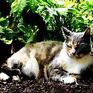 Cat Relaxing in Garden by Susan Savad