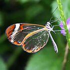 Wings Of Glass by Jo Nijenhuis