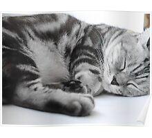 Sleeping Kitty Poster