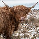 The Laughing Cow, Scottish Version by Jeremy Lavender Photography