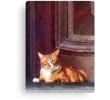 Cats - Orange Tabby in Doorway Canvas Print