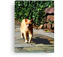 Orange Tabby Taking a Walk Canvas Print
