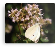 White Cabbage Butterfly Metal Print