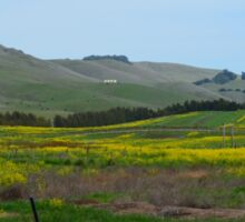 Mustard Flowers in Napa, California Sticker