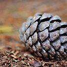 pine cone by marxbrothers