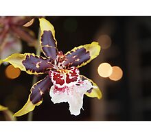 Yellow Tipped Orchid Photographic Print