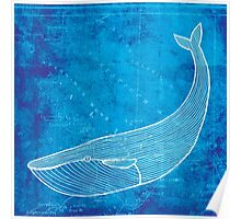 Whale, Illustration Over Nautical Map Poster