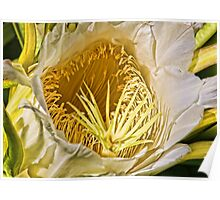 Night Blooming Cereus Close Up  Poster