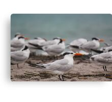 Atlantic Tern Bird Canvas Print