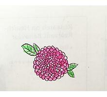 pink poppy flower Photographic Print