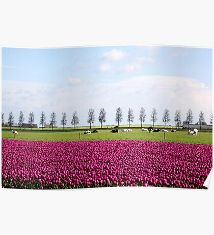 Holland in Spring Poster