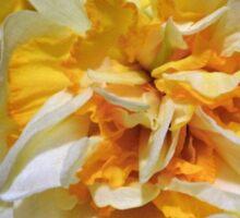 Double headed daffodil Sticker