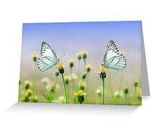 Butterflies and Daisies Greeting Card