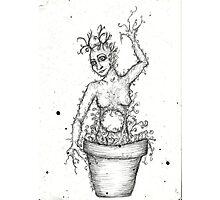 Mandrake women  Photographic Print