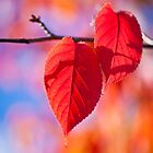 Two red leafs by greenpuffin