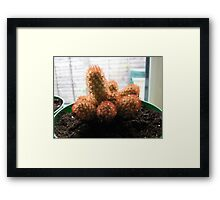 A Family of Cacti Framed Print