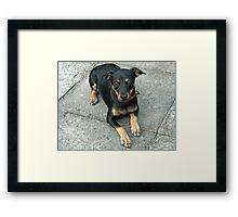 Murphy - Cute K9 Framed Print