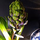 hyacinth spring . . . by evon ski