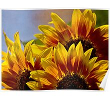 Sunflower tapestry Poster