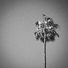 Palm Tree with Raven by Laurie Allee